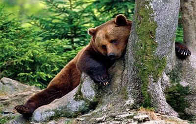 Ugrožene vrste u parku Belitsa | Lucky Bansko