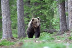 Medvedi u parku Belice | Lucky Bansko