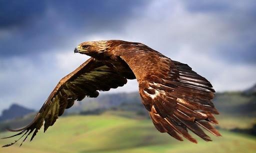 Životinjski svijet u Parku Pirin | Lucky Bansko