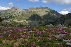 Park područja u Pirinu