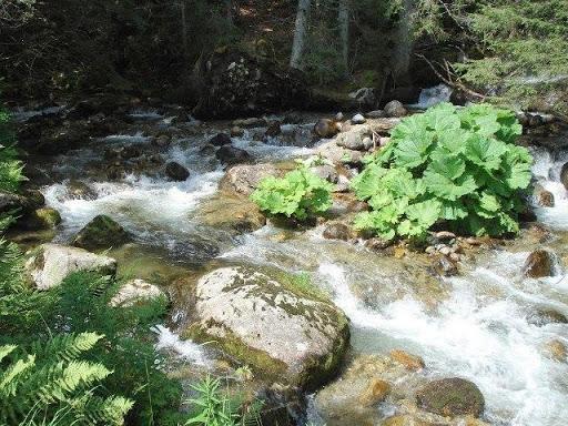 Reka Bistrica u Pirinu