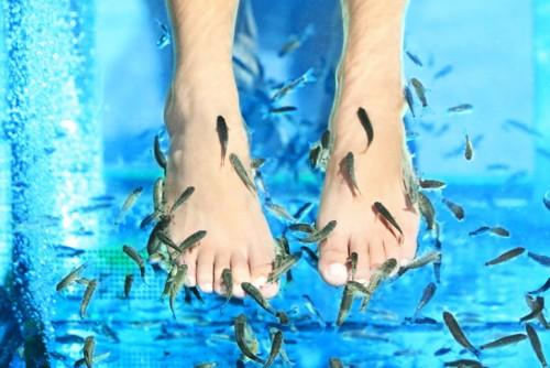 Fish Masaža | Aparthotel Lucky Bansko SPA & Relax